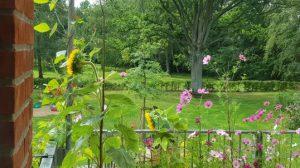 Blick auf LeNa-Garten vom Balkon