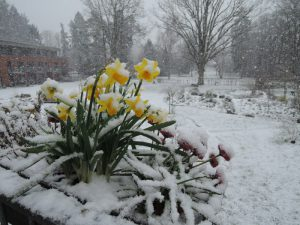 Schneefreuden am 30. März 2020