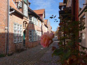 Altstadtgasse mit blühender Rose