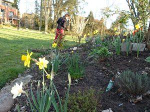 Frühjahrsarbeiten im Garten