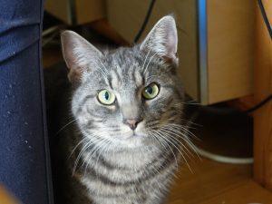 Katze blickt uns an