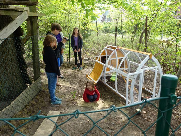 Kinder im Hühnergehege