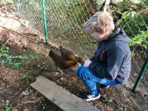 Junge füttert Hühner aus der Hand