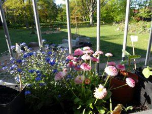 Blick vom Balkon auf LeNa-Garten